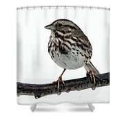 Song Sparrow Profile Shower Curtain