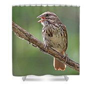 Song Sparrow Song Shower Curtain