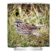 Song Sparrow Sweetie Shower Curtain
