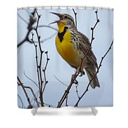Songster Shower Curtain