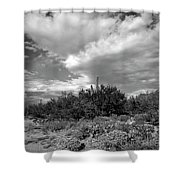 Sonoran Afternoon H10 Shower Curtain
