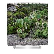 Sonoran Cactus Shower Curtain