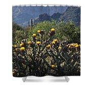 Sonoran Desert Cholla  Shower Curtain