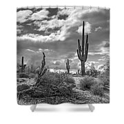 Sonoran Desert In Black And White  Shower Curtain