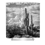 Sonoran Desert View Shower Curtain