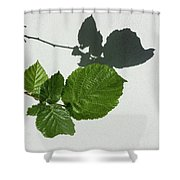 Sophisticated Shadows - Glossy Hazelnut Leaves On White Stucco - Horizontal View Left Down Shower Curtain