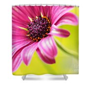 Soprano Curves Shower Curtain