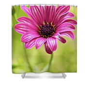 Soprano On A Brilliant Spring Day 2 Shower Curtain