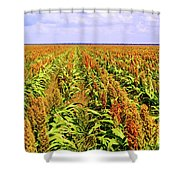 Sorghum Plants Fields In Botswana Shower Curtain