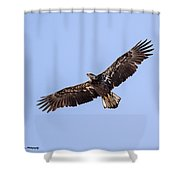 Soring High Shower Curtain