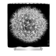 Soul Of A Dandelion Black And White Shower Curtain
