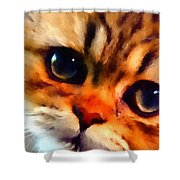 Soulfull Eyes Kitten Portrait Shower Curtain