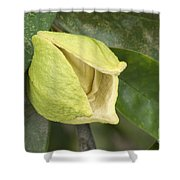 Soursop Fruit Blossom Shower Curtain