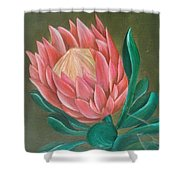 South Africa Protea Shower Curtain