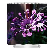 South African Daisy Shower Curtain