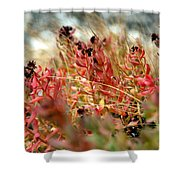 South Lake Beauties Shower Curtain