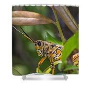 Southeastern Lubber Grasshopper Shower Curtain