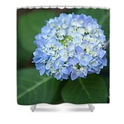 Southern Blue Hydrangea Blooming Shower Curtain