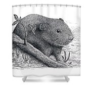 Southern Bog Lemming Shower Curtain