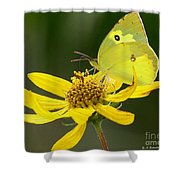 Southern Dogface Butterfly Shower Curtain