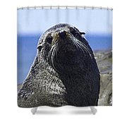 Southern Fur Seal Shower Curtain
