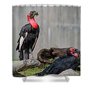Southern Ground Hornbills Shower Curtain