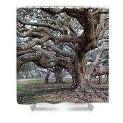 Southern Live Oak Shower Curtain