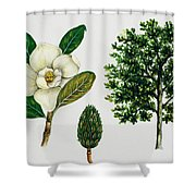 Southern Magnolia Or Bull Bay  Shower Curtain