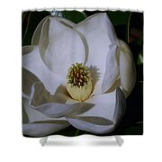 Southern Magnolia Shower Curtain