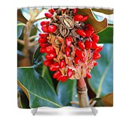 Southern Magnolia Seedpods Shower Curtain