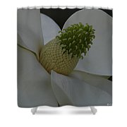 Southern Manor Shower Curtain