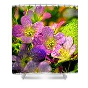 Southern Missouri Wildflowers 1 Shower Curtain