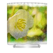 Southern Missouri Wildflowers - Mayapples Bloom - Digital Paint 2 Shower Curtain