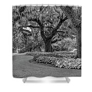 Southern Oaks In Black And White Shower Curtain