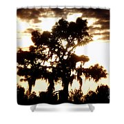 Southern Pine Shower Curtain