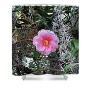 Southern Pink Camellia Shower Curtain