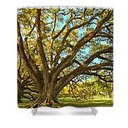 Southern Plantation Oak Trees Shower Curtain