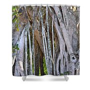 Southern Roots Shower Curtain
