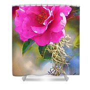 Southern Rose Shower Curtain