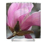 Southern Saucer Magnolia Closeup Shower Curtain