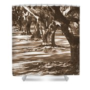Southern Sunlight On Live Oaks Shower Curtain