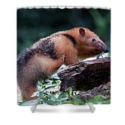 Southern Tamandua Or Collared Anteater Shower Curtain