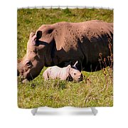 Southern White Rhino With A Little One Shower Curtain