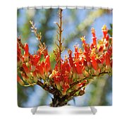 Southwest Ocotillo Bloom Shower Curtain
