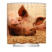 Sow And Piglets Shower Curtain