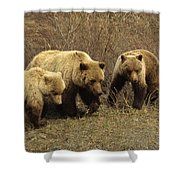 Sow Grizzly With Cubs Shower Curtain
