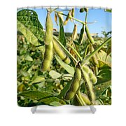 Soybeans In Autumn Shower Curtain