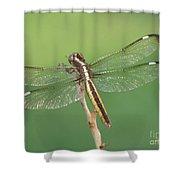 Spangled Skimmer Dragonfly Female Shower Curtain