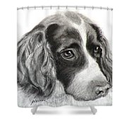 Spaniel Drawing Shower Curtain