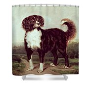 Spaniel Shower Curtain by JW Morris